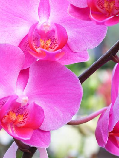 Ramo di orchidee