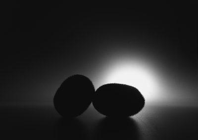 Silhouette di kiwi