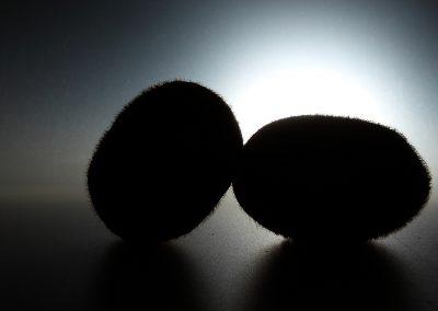 Silhouette di kiwi in bianco e nero