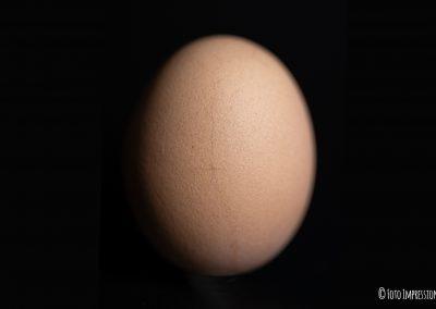 Uovo - Fine di una morte annunciata - 2 parte
